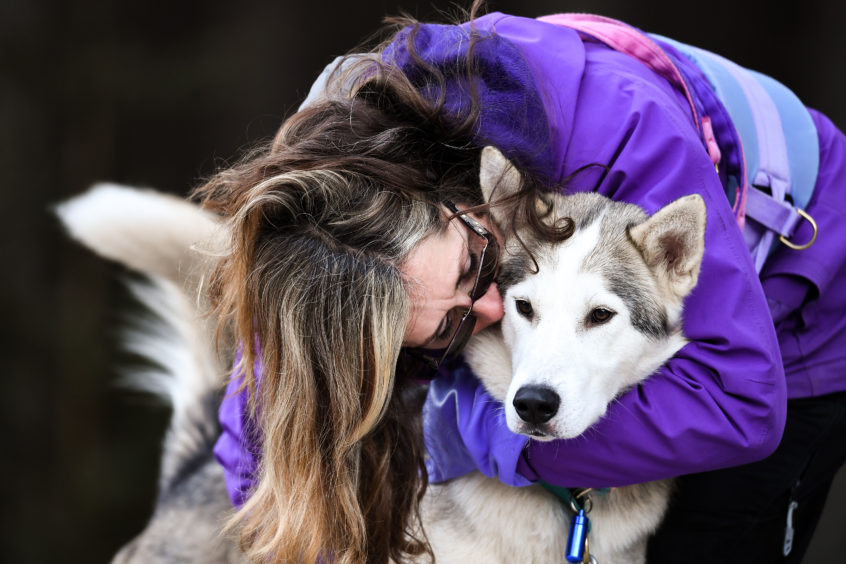 AVIEMORE, SCOTLAND - JANUARY 23: Musher Julie Platt and her huskies practice at a forest course ahead of the Aviemore Sled Dog Rally on January 23, 2019 in Feshiebridge, Scotland. Huskies and sledders prepare ahead of the Siberian Husky Club of Great Britain 36th race taking place at Loch Morlich this weekend near Aviemore. (Photo by Jeff J Mitchell/Getty Images)