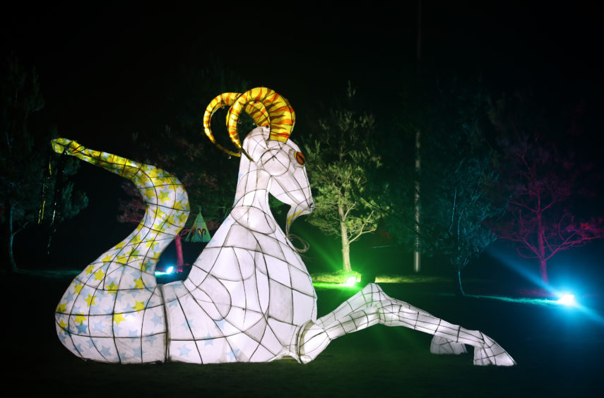 An animal lantern sculpture resembling the star sign Capricorn.