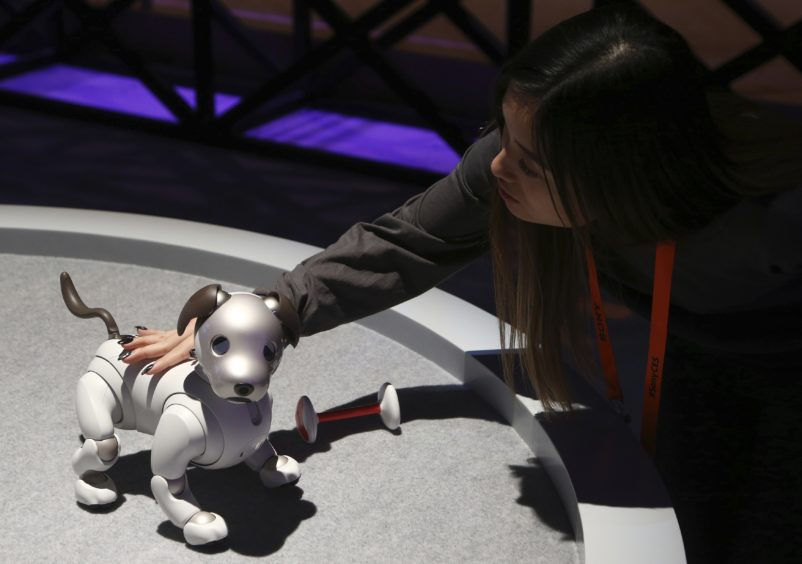 The new edition Sony Aibo robot dog incorporates a series of sensors, cameras, and actuators to activate the pup and keep it interactive, as seen inside the Sony display area.