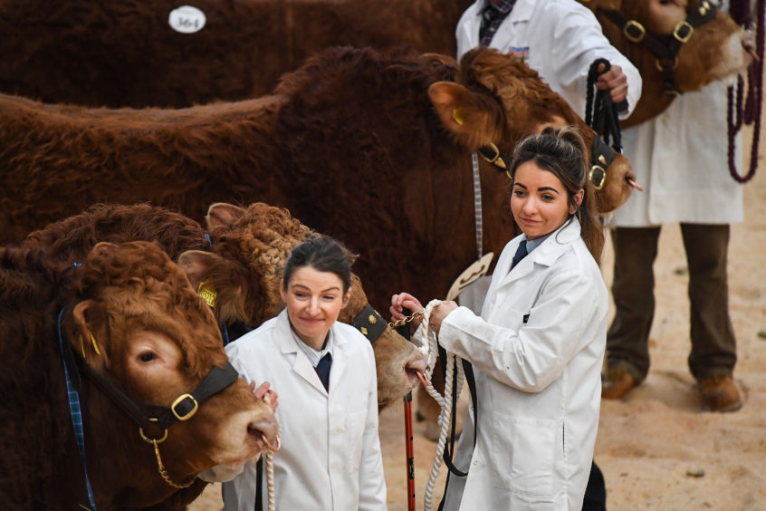 Farmers attend the annual Stirling Bull Sales event, one of the biggest in the UK, which runs over two weeks at United Auction  in Stirling, Scotland. Around 12,000 British and international farmers, commercial buyers and pedigree enthusiasts are visiting the city for the event, which will feature ten pedigree breeds.