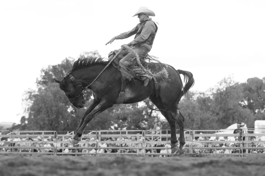 A competitor holds on to his ride as he competes in the saddle bronc ride during the Mudgee Show Rodeo in Mudgee, Australia.