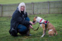 Shirley Perrie, a volunteer from Staffie Smiles Rescue, is appealing for foster carers in Fife to come forward to give some of their rescues a second chance.