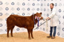 The overall champion exhibition calf topped the sale at £4,600.