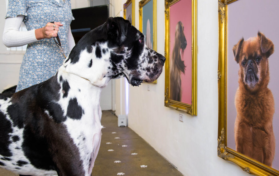 Frasier admires some of the portraits on display.