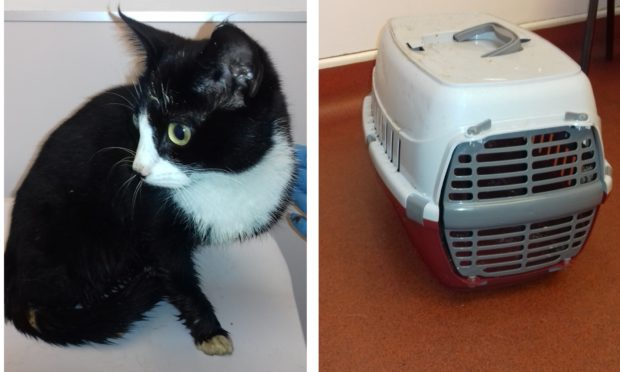 Abandoned Clover was found in a pet carrier in a bin liner, covered in urine and faeces