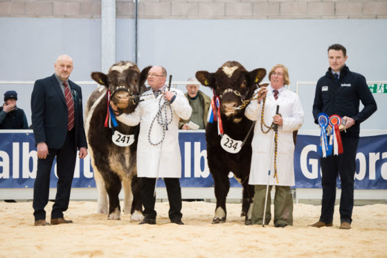 Podehole Landmark and Meonhill Lion King, champion and reserve in the Beef Shorthorns.