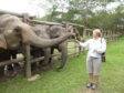 McGrouther feeding the elephants at Elephant Valley Thailand sanctuary.
