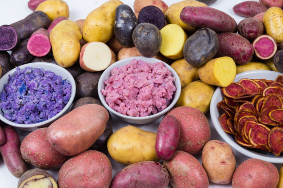 Unusual  seed potatoes  will be available to buy at the Coupar Angus event.