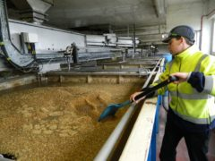 Malting barley production could be impacted by the withdrawal of the fungicide.