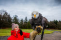 Gayle handles Pilgrim, a scary-looking bald eagle!
