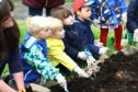 Children from the Law Nursery planting beans.