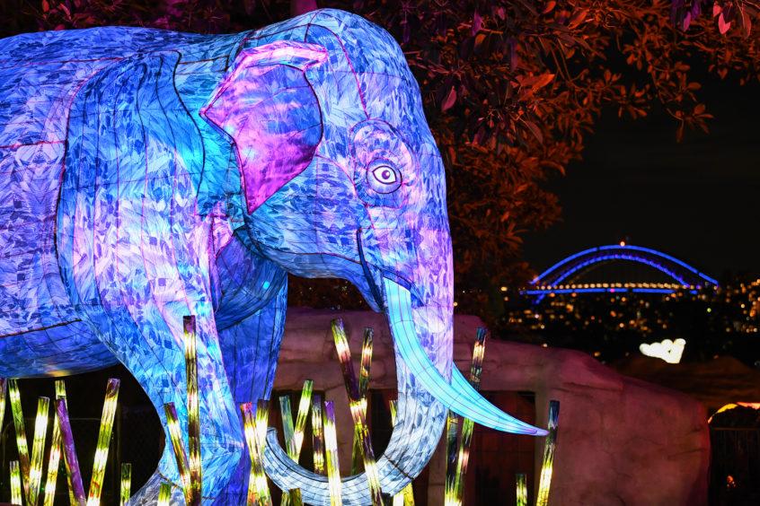 An Asian elephant lantern sculpture is illuminated.