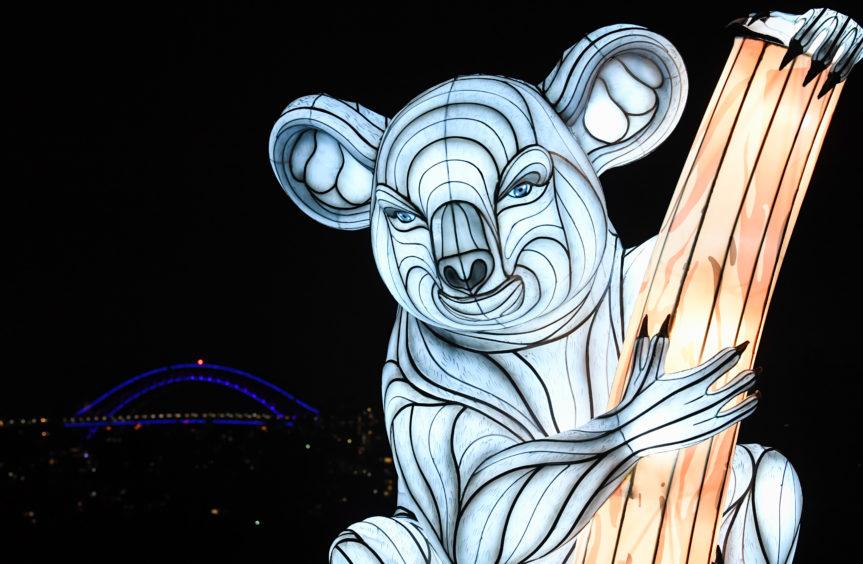 A koala lantern sculpture.