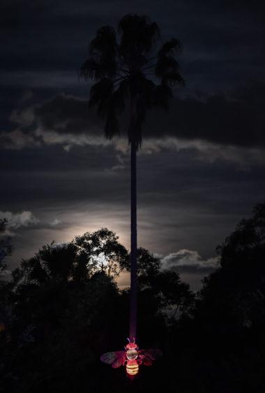 An illuminated lantern sculpture of an Australian stingless bee at the bottom of a palm tree.