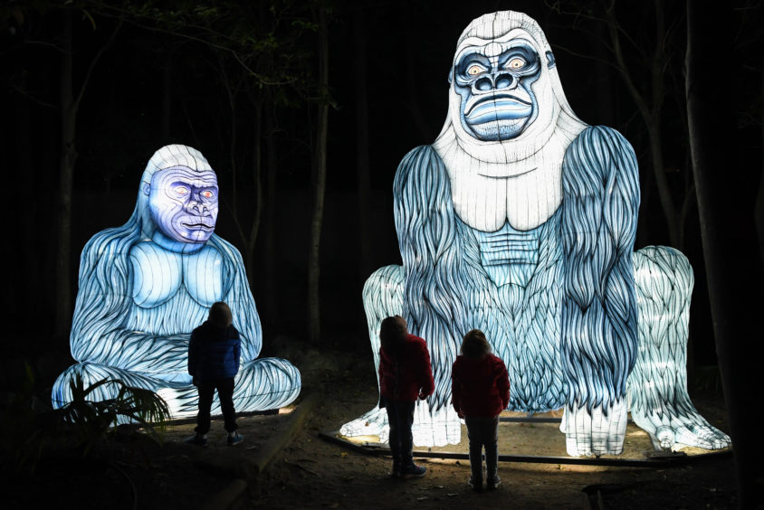 An illuminated lantern sculpture of two gorillas are watched by three children during the media preview of Vivid Sydney at Taronga Zoo.