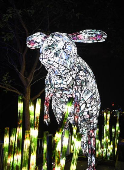 An illuminated lantern sculpture of a bilby.