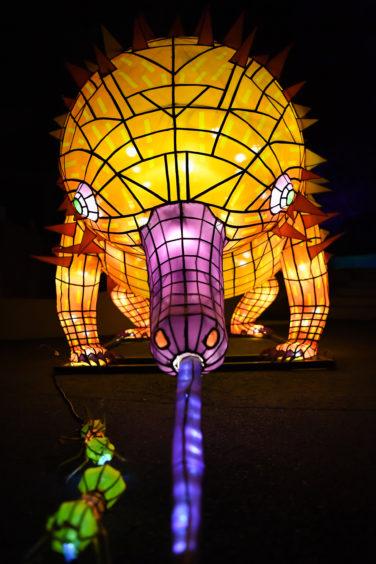 An illuminated lantern sculpture of an echidna or spiny anteater.