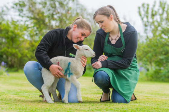 Helen Poole, farm shop helper and lambing assistant, and Claire Pollock with one of the orphaned lambs.