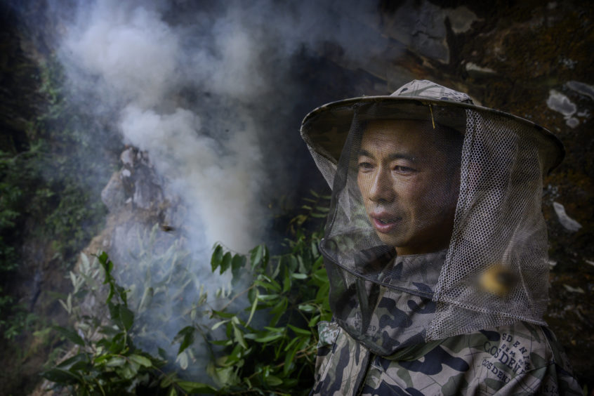 Chinese ethnic Lisu honey hunter Dong Haifa stands still to avoid being stung after making a fire to create smoke before gathering wild cliff honey from hives in a gorge on May 10, 2019 near Mangshi, in Dehong prefecture, Yunnan province China.