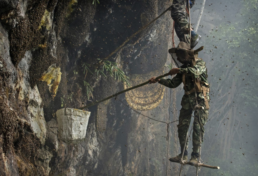 Chinese ethnic Lisu honey hunter Mi Qiaoyun is surrounded by bees as he stands on a makeshift ladder while gathering wild cliff honey from hives in a gorge on May 11, 2019 near Mangshi, in Dehong prefecture, Yunnan province China.