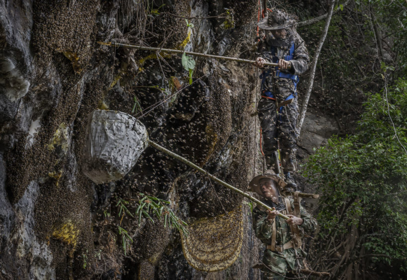 Chinese ethnic Lisu honey hunters Dong Haifa, top, and Mi Qiaoyun stand on a makeshift rope ladder as they are surrounded by bees as they work together gathering wild cliff honey from hives in a gorge on May 11, 2019 near Mangshi, in Dehong prefecture, Yunnan province China.
