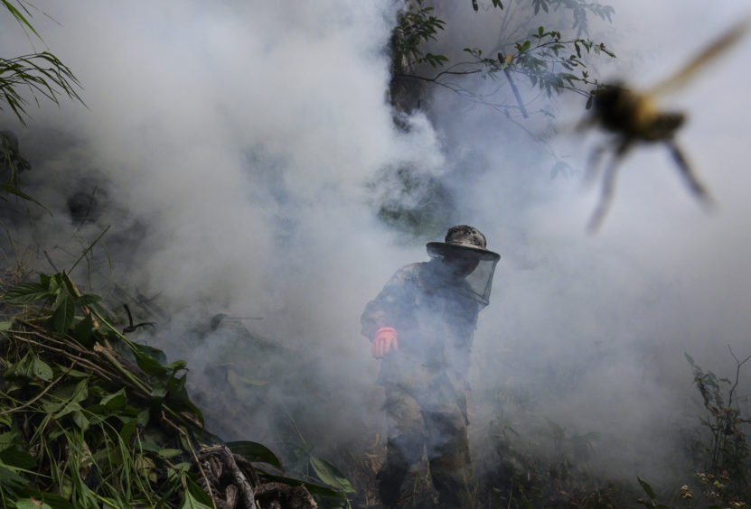 Chinese ethnic Lisu honey hunter Ma Yongde walks in smoke after making a fire before gathering wild cliff honey from hives in a gorge on May 10, 2019 near Mangshi, in Dehong prefecture, Yunnan province China.