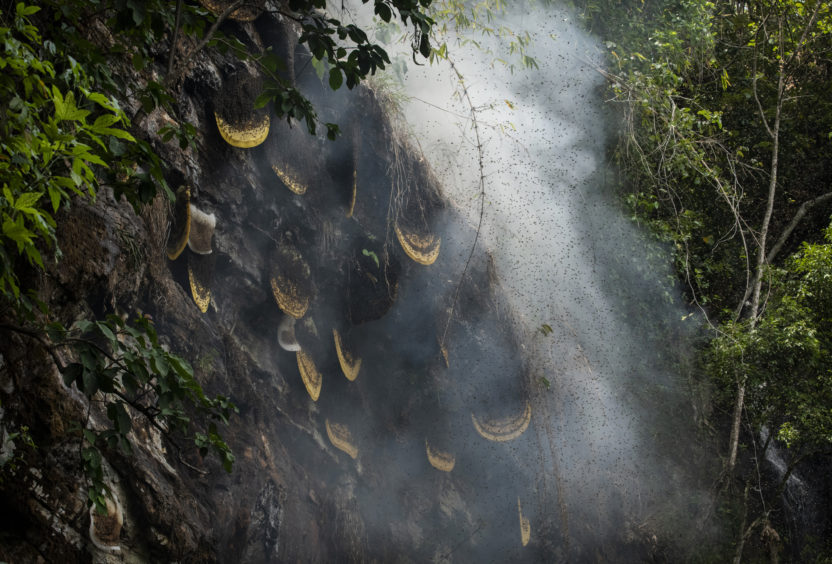 Smoke is seen around hives where Chinese ethnic Lisu honey hunters were gathering wild cliff honey in a gorge onnear Mangshi, in Dehong prefecture, Yunnan province China