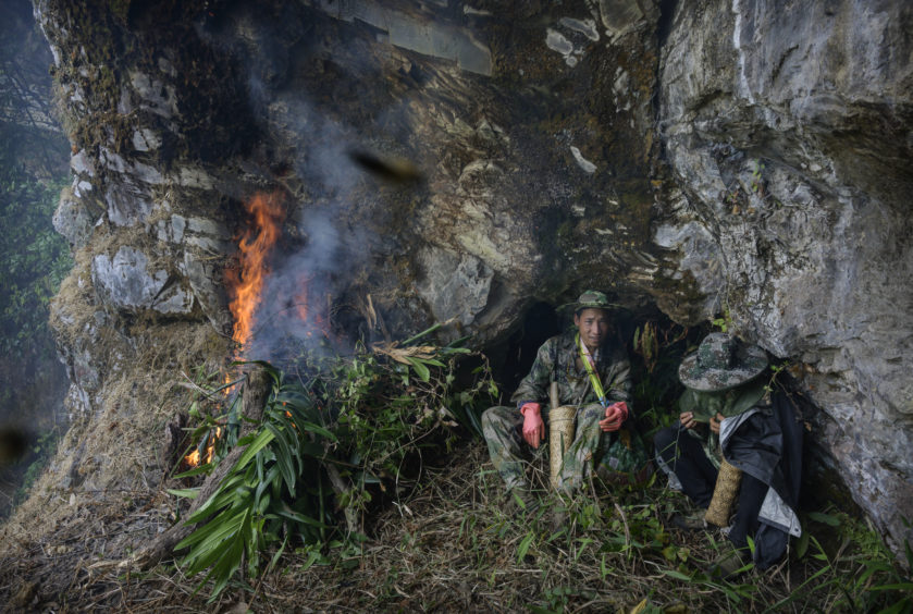 Chinese ethnic Lisu honey hunters Mi Qiaoyun, right, and Ma Yongde sit still next to a fire they set to deter bees before gathering wild cliff honey from hives in a gorge  near Mangshi, in Dehong prefecture, Yunnan province China.