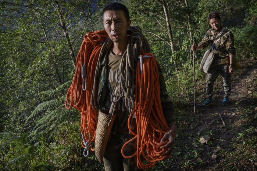 Chinese ethnic Lisu honey hunter Dong Haifa, left, and brother Dongwu carry gear as they walk out on a trail after gathering wild cliff honey from hives in a gorge on May 31, 2019 near Mangshi, in Dehong prefecture, Yunnan province China.