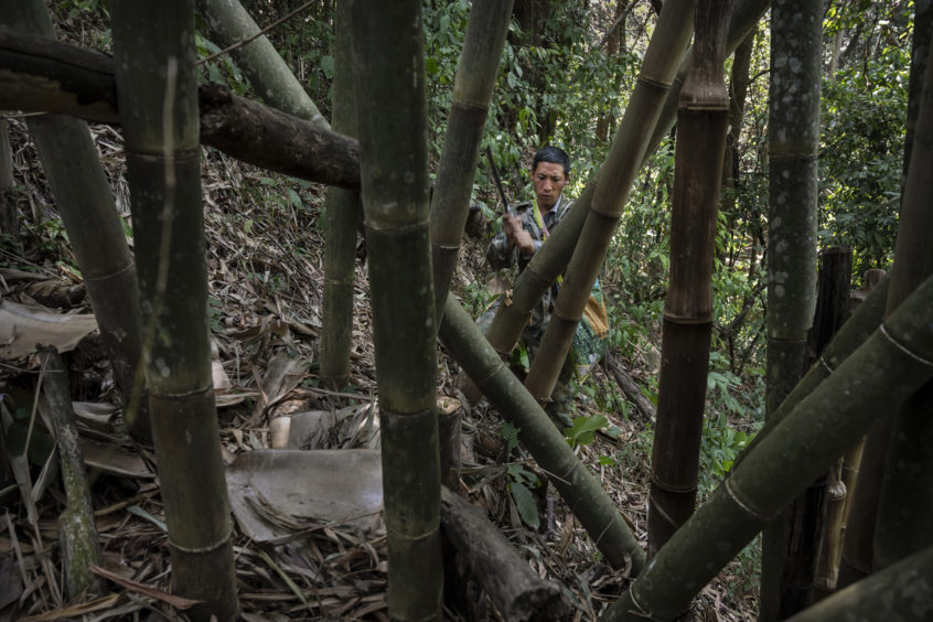 Chinese ethnic Lisu honey hunter Ma Yongde chops bamboo to make a container  after gathering wild cliff honey from hives in a gorge on May 10, 2019 near Mangshi, in Dehong prefecture, Yunnan province China