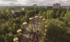 An abandoned ferris wheel stands on a public space overgrown with trees in Chernobyl.