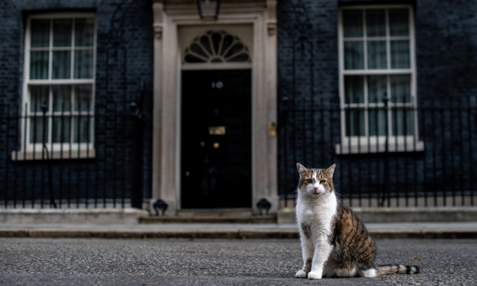 Larry, the Downing Street cat, sits in the street as ministers attend a cabinet meeting at 10 Downing Street on June 11, 2019 in London, England. Since Theresa May resigned as Prime Minister the final candidates for the Conservative Party leadership race have been confirmed, with 10 running to become the next Prime Minister.