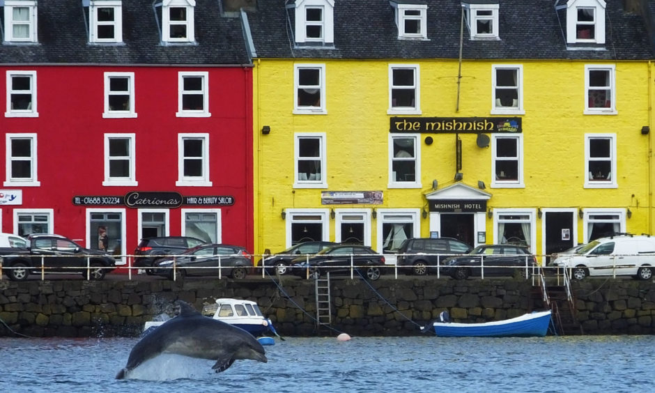 A Bottlenose dolphin in Tobermory Harbour, Scotland, as a whale trail described as the first of its kind in the UK has launched along the west coast of Scotland. The Hebridean Whale Trail is connecting more than 30 destinations giving more opportunities to spot whales, dolphins and porpoises.