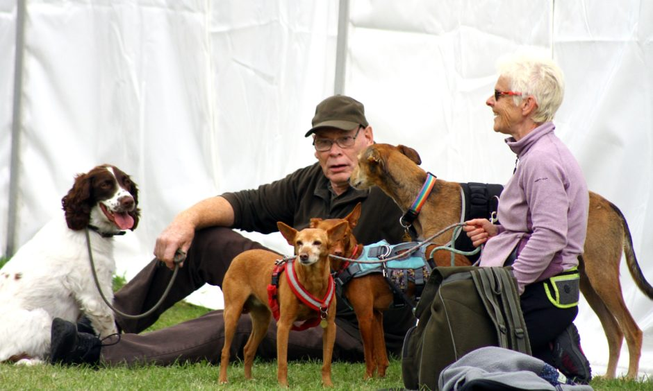 Scottish Game Fair at Scone Palace,Perth, time to relax with the dogs.
