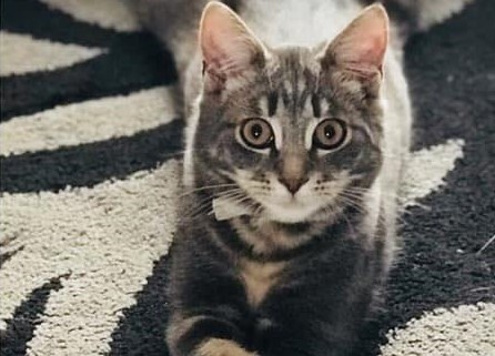 Guardbridge family's beloved cat deliberately killed, says vet.