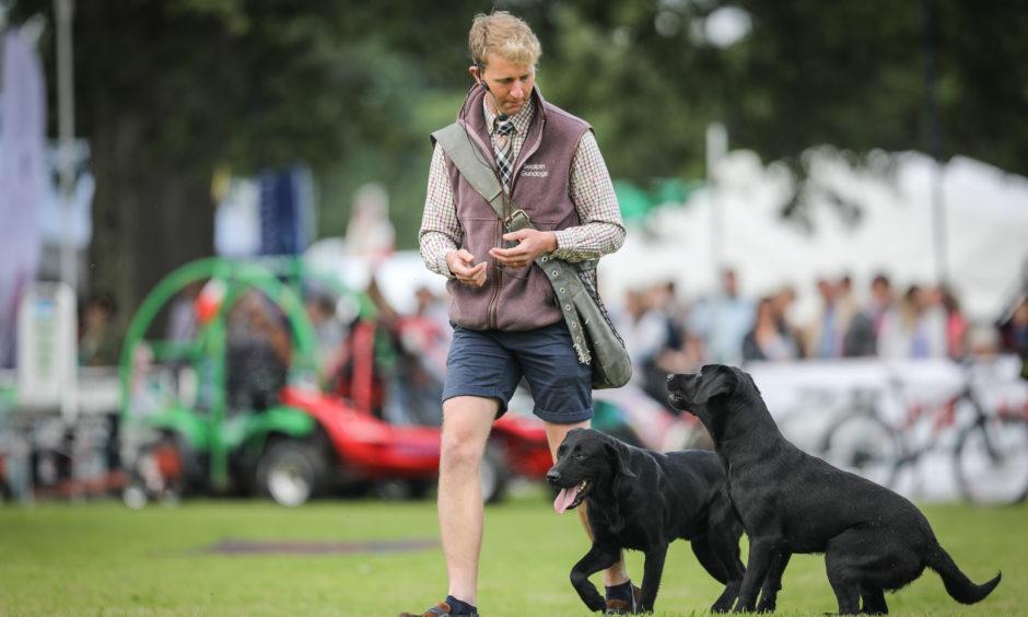 Sealpin gun dog display at the Scottish Game Fair at Scone Palace.