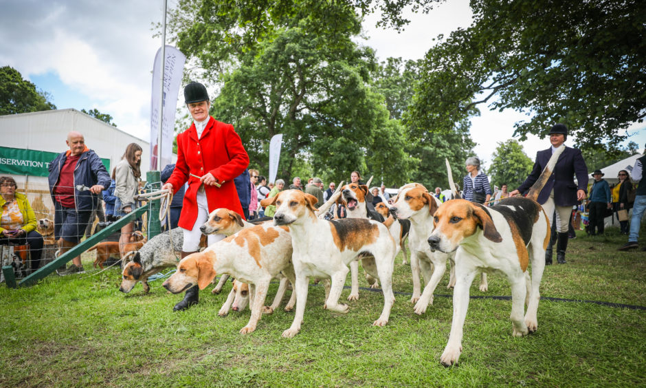 Claire Bellamy who displalyed her hounds in the ring at the Scottish Game Fair at Scone Palace.