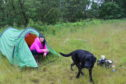 Gayle and her faithful hound found a nice spot for wild camping in Glen Dye.