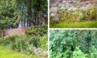 Weeds at Perth Crematorium summer garden.
