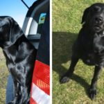 Missing dog Rowan feared stolen as Perthshire filling station thieves thwart search