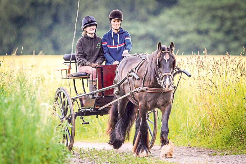 Gayle and Che driving Tay the Gypsy Cob.