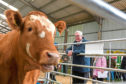 Fergus Ewing is to chair a Beef Summit in Stirling Agricultural Centre.