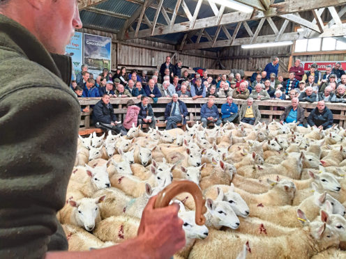 The scene inside the sale ring at Lairg.