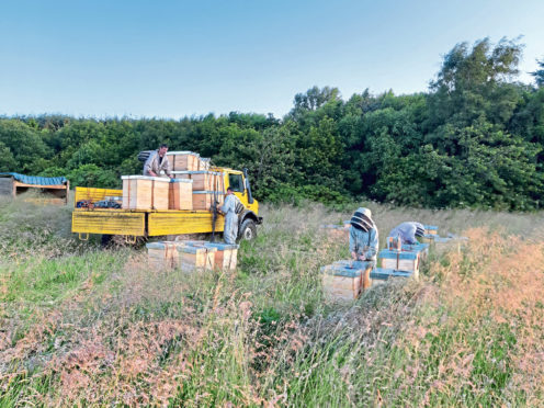 Hives are loaded on to the Unimogs to be transported to the heather harvest.