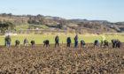 Field walking at Freeland Farm by Bridge of Earn.