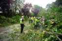 The clear-up operation in full swing following the tree which fell across the A932 near Pitmuies Gardens.