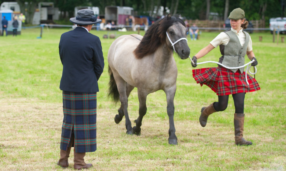 Judging of one of the horse categories.
