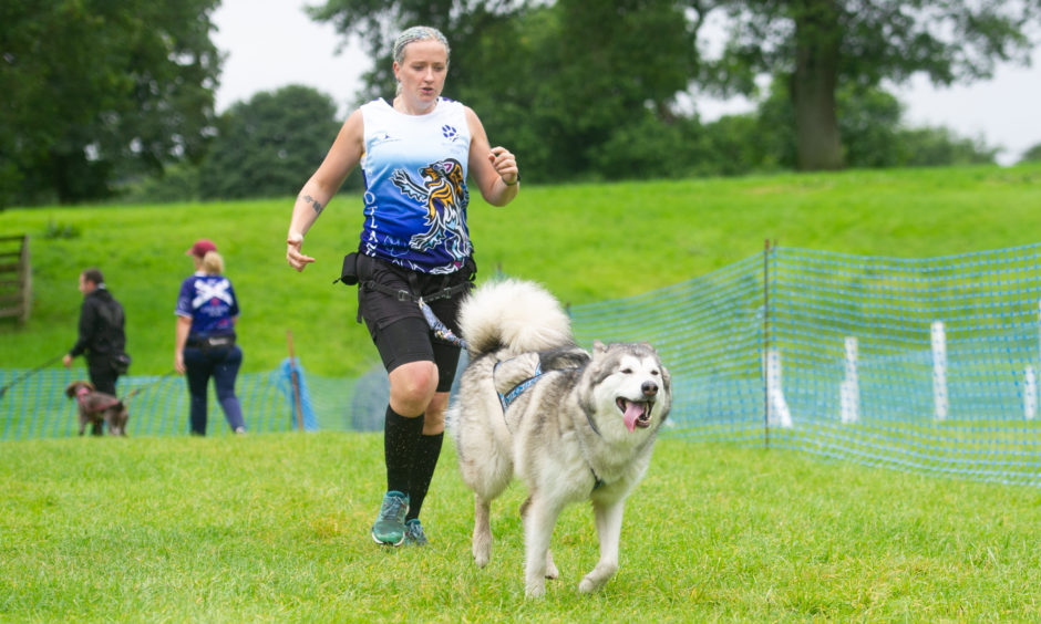 Cani-X demonstrated how you can combine jogging and excercising your dog - Laura Fennell with 'Maya'.