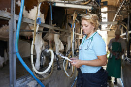 Two veterinary investigation officers  will be employed in Perth to liaise  with local vets.