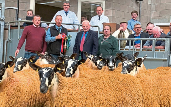 The champion pen at the Stirling sale came from Mark Smyth, Shields.